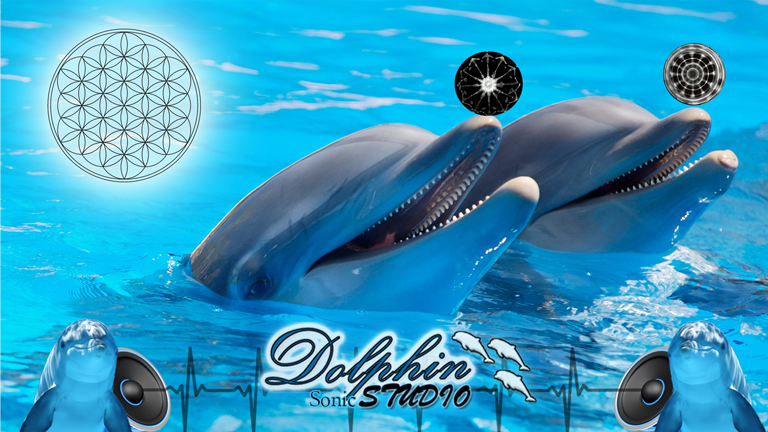 Dolphin sonic studio youtube768432